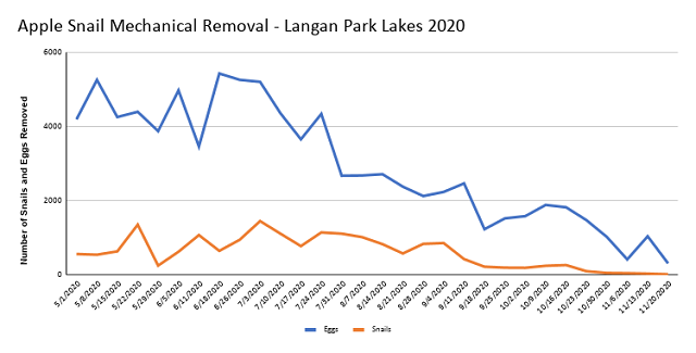Apple Snail Mechanical Removal Langan Park Lakes 2020
