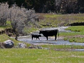 Pathogens livestock