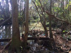 Brights creek 2