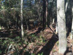 Brights creek 3