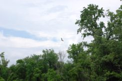 Tmc osprey