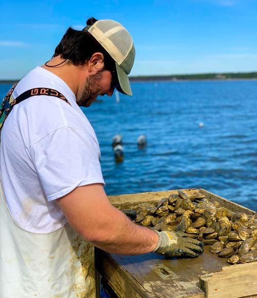 Gage Swann Sorting Oysters for Mobile Oyster Co